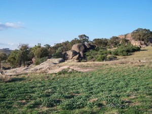 Boulders scattered on hillsides Central New South wales 1