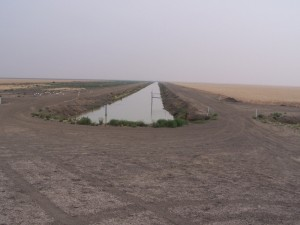 Irrigation Farming on a Vast Scale. Hay