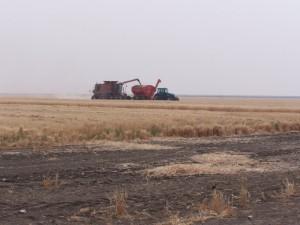 Irrigation Farming on a Vast Scale. Hay