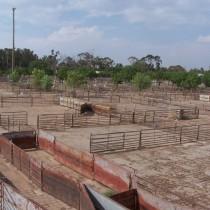 Extensive Saleyards. West Wyalong