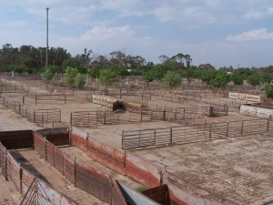 Extensive Saleyards. West Wyalong