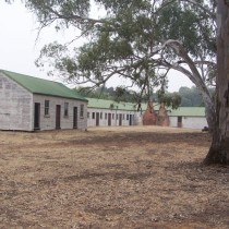 Iconic Aussie Shearing Shed. Hay