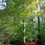 Leurall Lapstone meadow bscreen centrsal