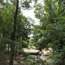 screen central botanic gardens 1