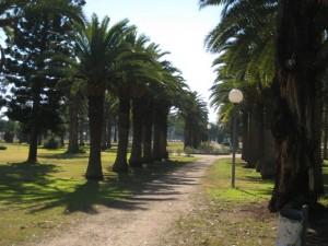Canowindra Park 2