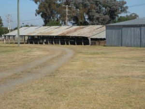 Canowindra Showgrounds 3
