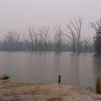 Flooded Ghostly Forest. Hay