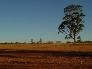 Red Earth Farmland. Condobolin