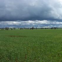 Grain Crop. Forbes