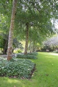 Everglades garden trees screen central