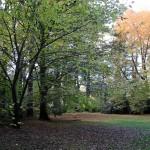 Leurall a garden screen central