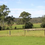 Screen Central Belgenny Farm 6