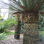 screen central botanic gardens 2