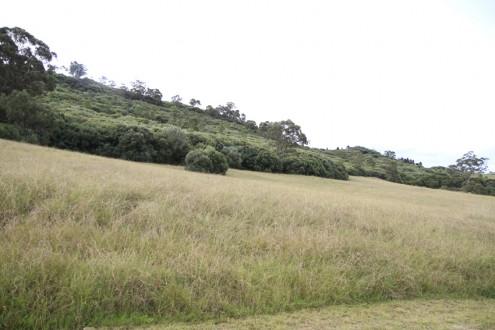 screen central botanic gardens 3