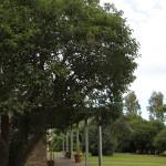 Screen Central Aberdoon House 5