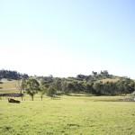 screen central Calmsley Hill Farm 9