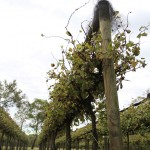 wivenhoe scren central vineyard