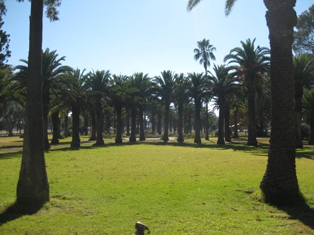 Canowindra Park 1
