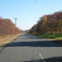 Tree Lined Street 1